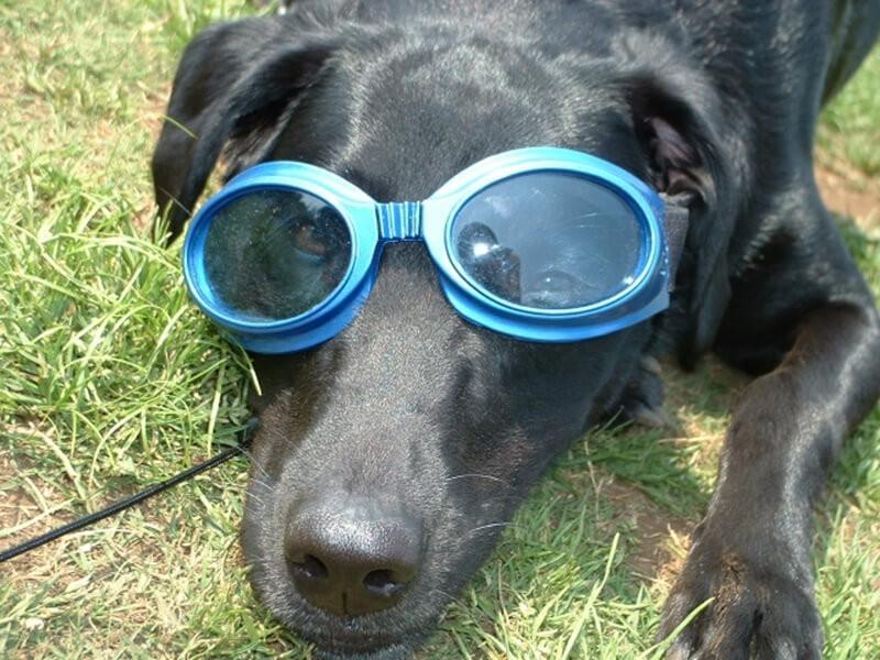 犬も熱中症に注意 夏の暑さ対策と万が一の応急処置 Alphaicon