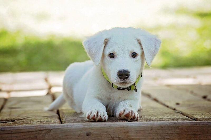 尻尾 噛む 子犬