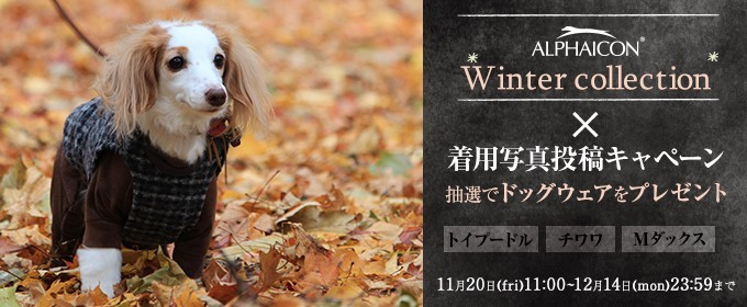 2015 Winter Collection 犬種別特集!