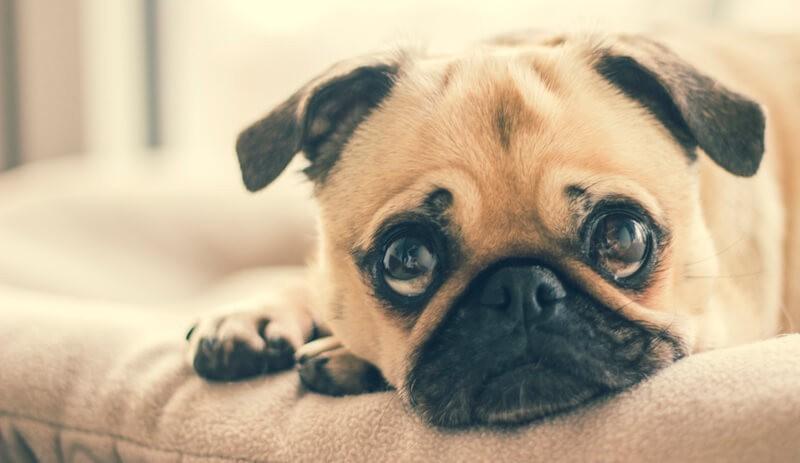 犬 目やに 原因