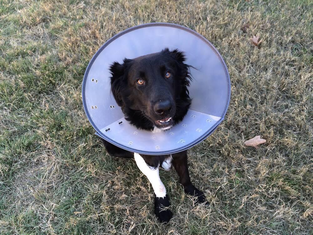 傷口 舐める 犬